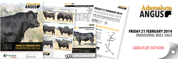 WEB-BANNER--Internal-page--bull-sale