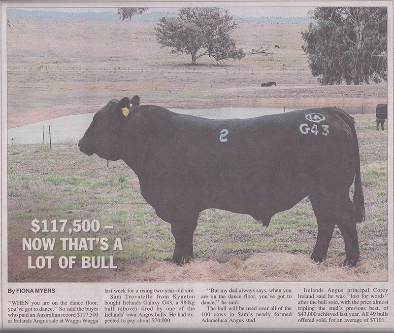 thats-a-lot-of-bull-NP